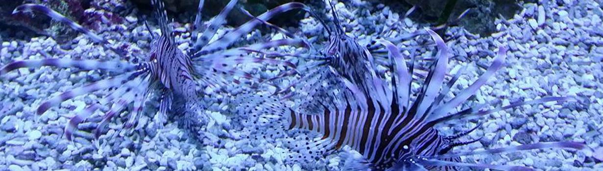 slider-fish